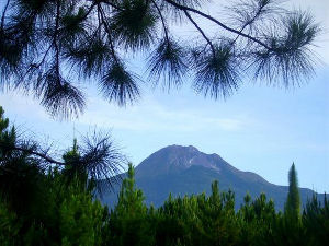 The Mt Apo
